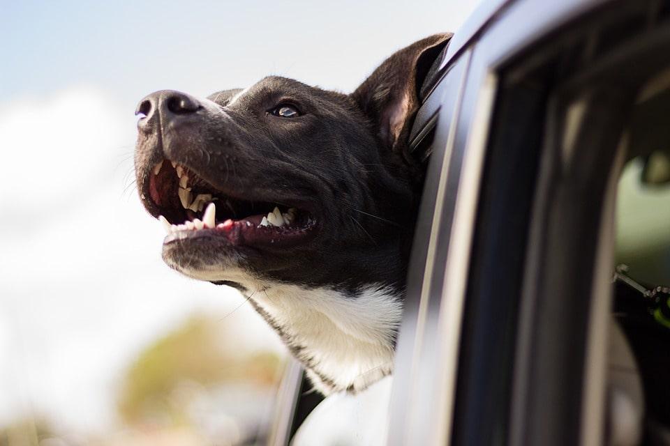 Kamera till hund: De bästa alternativen!